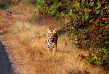 Cenin Tiger Tours